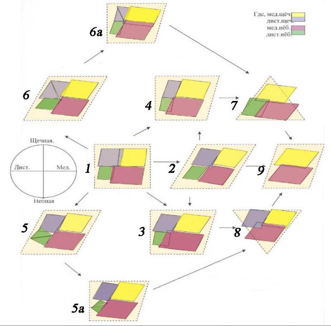 Разновидности форм коронковой части верхних моляров человека